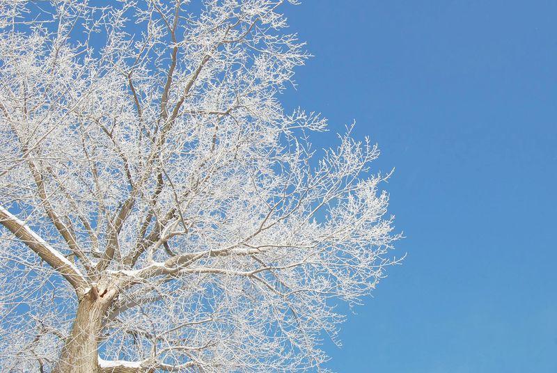 Hoar frost2