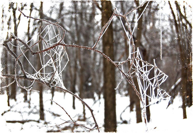 Hoar frost6