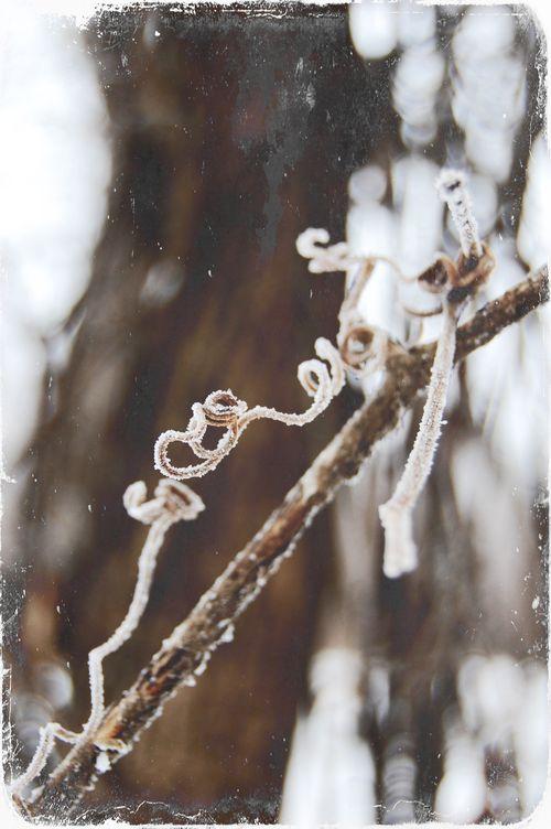 Hoar frost5