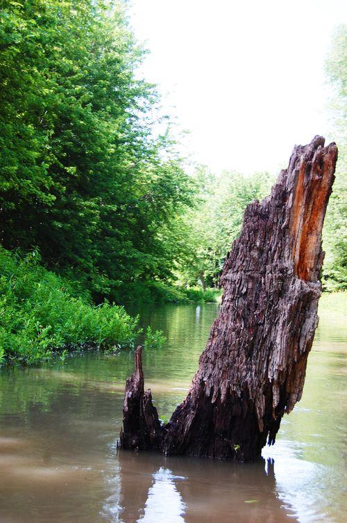 Backwater7