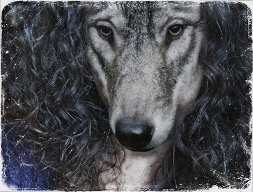 Wolf Mother2